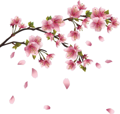 fleurs pommier.png