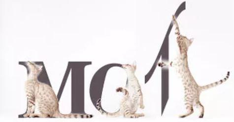 les chats mots.JPG
